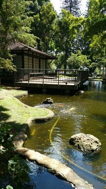 1515 Nuuanu Ave #1154 Queen Emma Gardens #1154 Photo #1