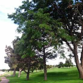 Photo of Fitzsimons Golf Course