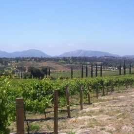 Photo of Fallbrook Winery