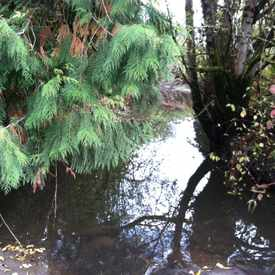 Photo of Fanno Creek Park