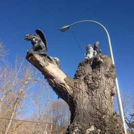 Photo of Gargoyle Tree