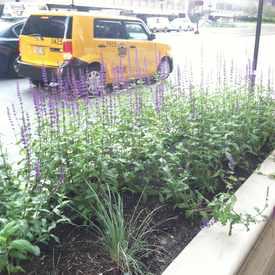 Photo of Sidewalk Garden