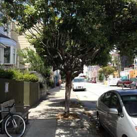 Photo of The Wishing Tree