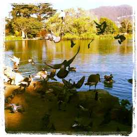 Photo of Stow Lake