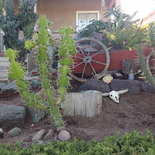 photo of Neighbor's Landscaping at 3545 Cherokee Avenue San Diego CA 92104