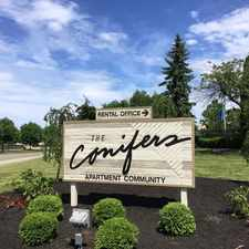 Rental info for Conifers
