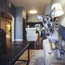 Rental info for Legado de Ravel Apartment Homes in the Sacramento area