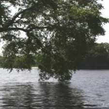 Rental info for Lake Club