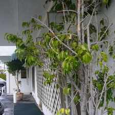 Rental info for Must See, It Is In 12 Unit Secure Building. in the Beverly Hills area