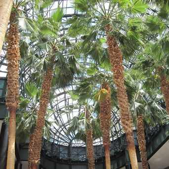 Photo of WFC Winter Garden in Battery Park City, New York