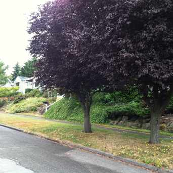 Photo of GLENN WAY SW & 46TH AVE SW in Genesee, Seattle