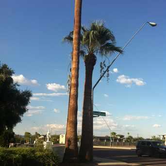 Photo of Palm Trees in Comite de Families en Accion, Mesa