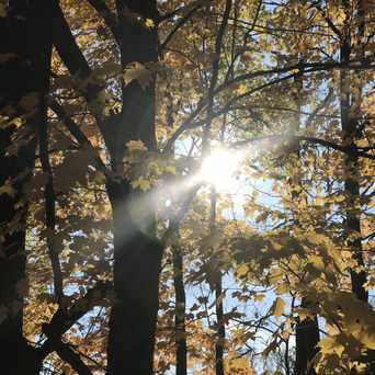 Photo of Bromley Park in Burlington