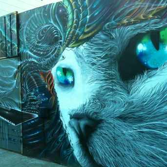 Photo of Cosmic cat Street Art At Mission And Sycamore in Mission District, San Francisco
