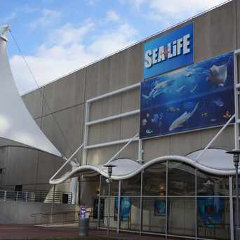Photo of Sea Life in Crown Center, Kansas City