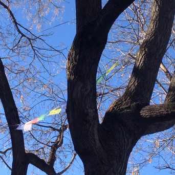 Photo of Prayer Flags in Sunnyside, Calgary