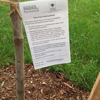 Photo of Tree Replanting Project in Carter Park, Vancouver