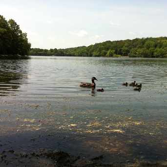 Photo of Jamaica Pond, Chestnut St X Perkins St in Jamaica Hills - Pond, Boston