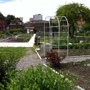 Photo of Lenox & Kendall Community Garden in Lower Roxbury, Boston