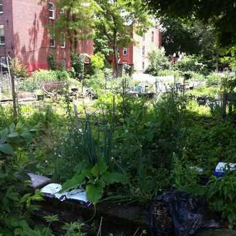 Photo of Bessie Barnes Community Garden in Lower Roxbury, Boston