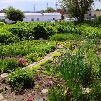 Photo of East Main St Community Garden in Marquette, Madison