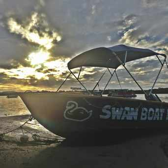 Photo of Swan Boat Hire in Sunshine Coast