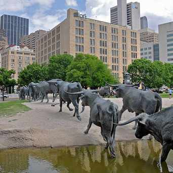 Photo of Pioneer Plaza Cattle Sculptures in Dallas