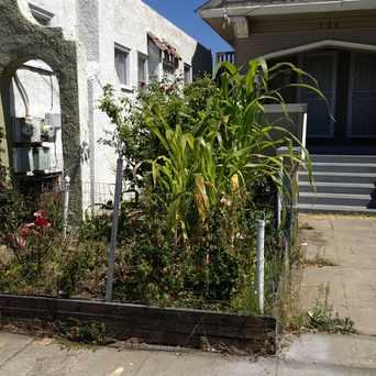 Photo of Milpita (little corn field) in Oakland in Hoover-Foster, Oakland