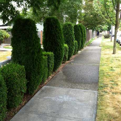 Photo of FAUNTLEROY WAY SW & SW JUNEAU ST in Fairmount Park, Seattle