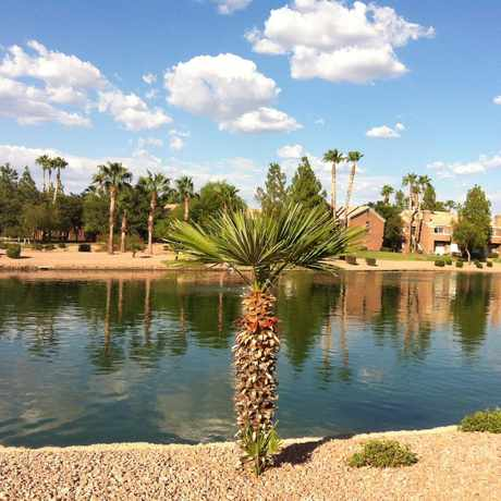 Photo of Landscape in Superstition Springs, Mesa