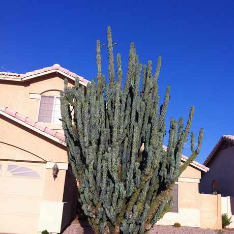 Photo of Cactus in Park Village, Gilbert