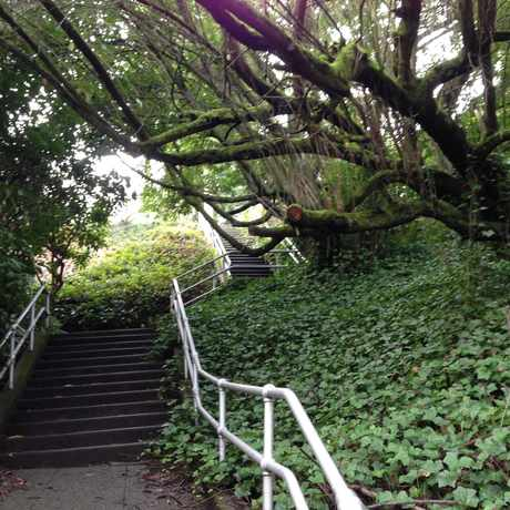 Photo of Urban Stairwell in Madrona, Seattle