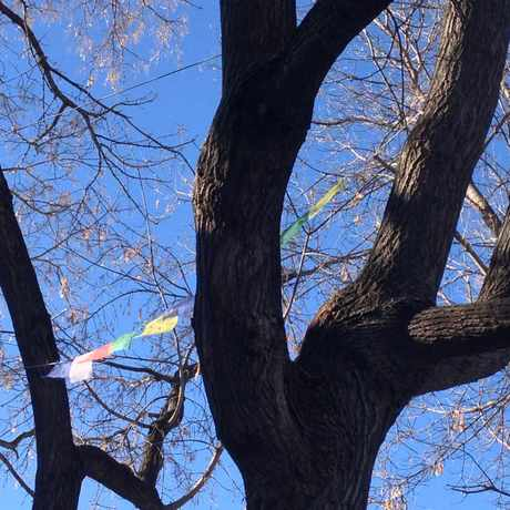 Photo of Prayer Flags in Sunnyside, Calgary