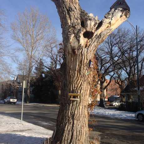 Photo of Birdhouse Tree in Sunnyside, Calgary