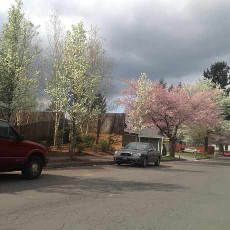 Photo of Trees along the city streets in Rockwood, Gresham