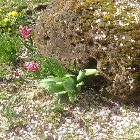 Photo of Urban Garden in Rockwood, Gresham