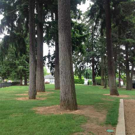 Photo of Carter Park in Vancouver