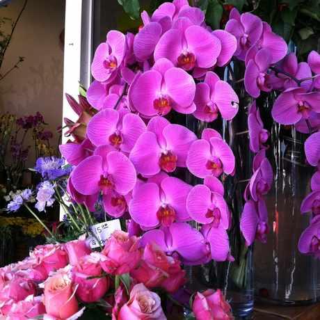 Photo of Flower Shop in Castro, San Francisco