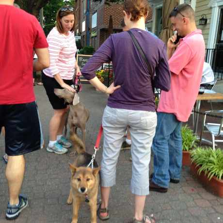 Photo of Dog Friendly in Del Ray, Alexandria