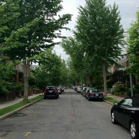 Photo of Tree-Line Neighborhood Scene in Glover Park, Washington D.C.