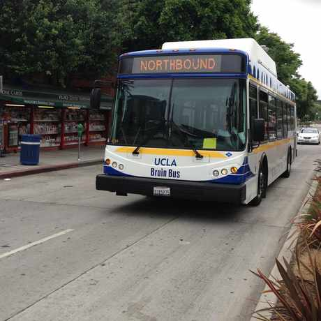 Photo of UCLA BRUIN BUS in Westwood, Los Angeles