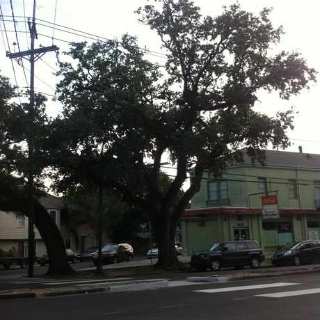Photo of Trees of Esplanade Ave in Fairgrounds, New Orleans