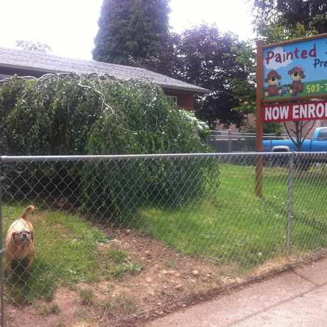 Photo of Painted Bear Pre School in Mill Park, Portland