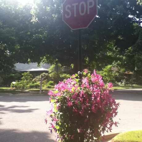 Photo of Decorated Stop Sign in State College