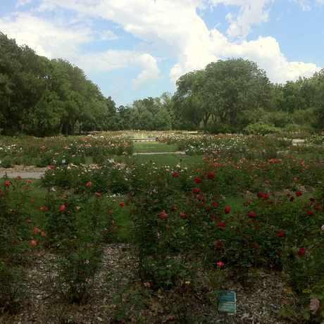Photo of Park of Roses at Whetstone Park in Columbus